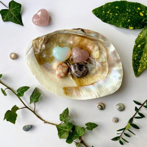 Large river shell soap dish